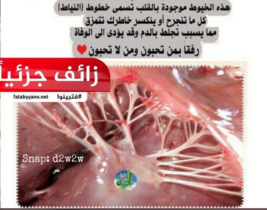 خيوط النياط، هي عبارة عن أوتار موجودة فى القلب تتمزق عند الحزن الشديد