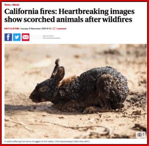 حقيقة صورة حيوان محترق