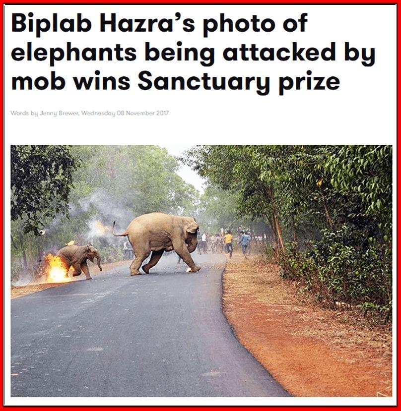 حقيقة صورة الفيل وكرات النار