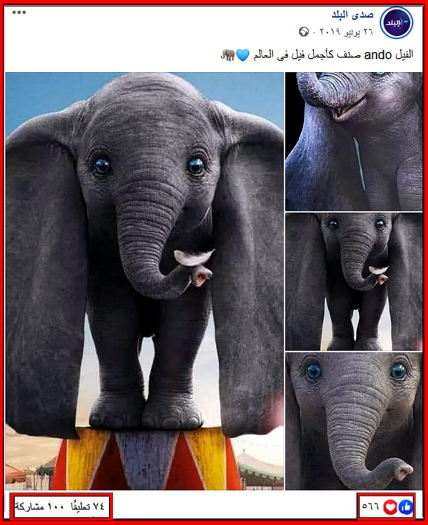ادعاء اجمل فيل في العالم