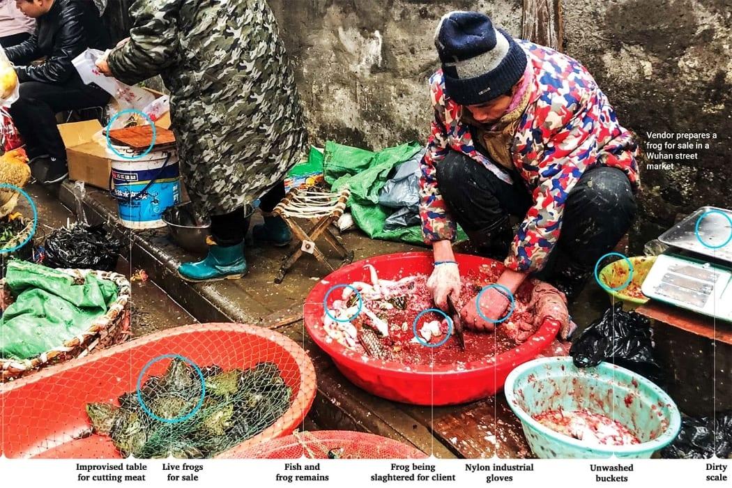 فيروس كورونا وتناول الحيوانات الغريبة بالصين
