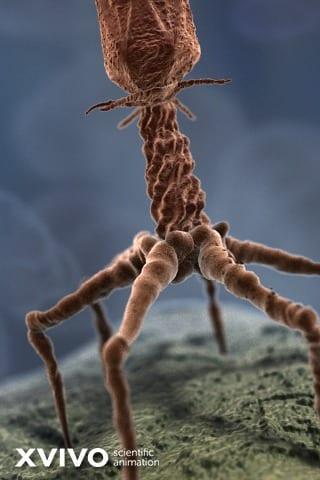 عمل فني يصور شكل فيروس bacteriophage