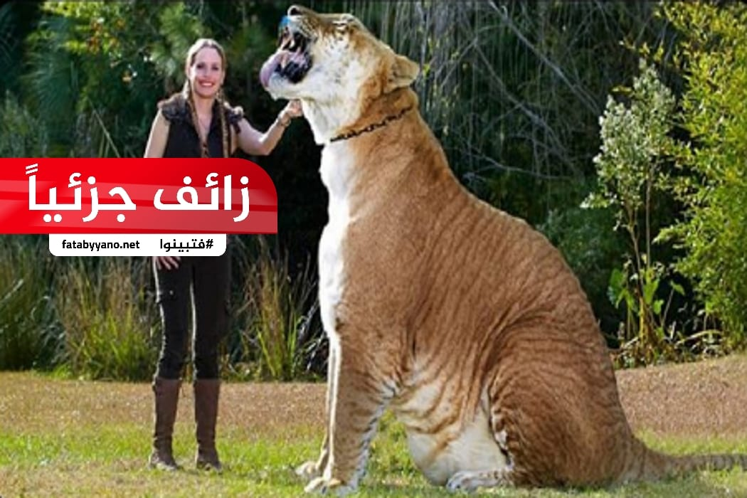 حيوان اللايغر