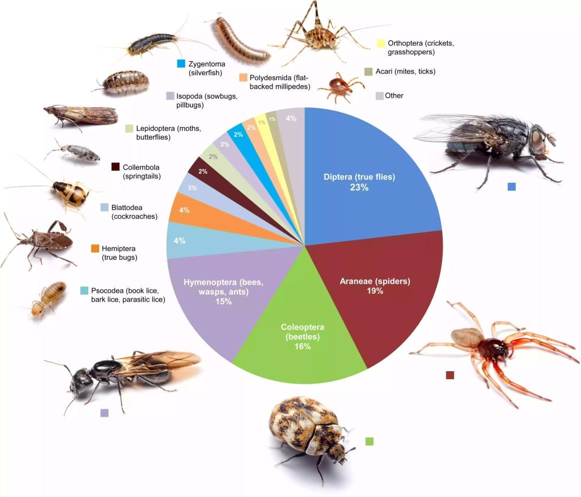 توزع الحشرات في المنزل