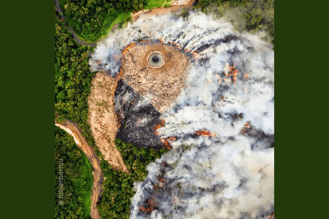 حرائق الأمازون على شكل ببغاء
