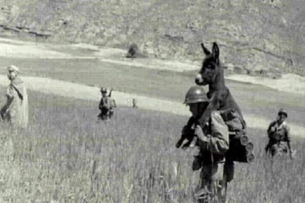 جندي يحمل حمار