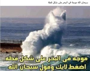 ادعاء صورة قطة في موجة على البحر