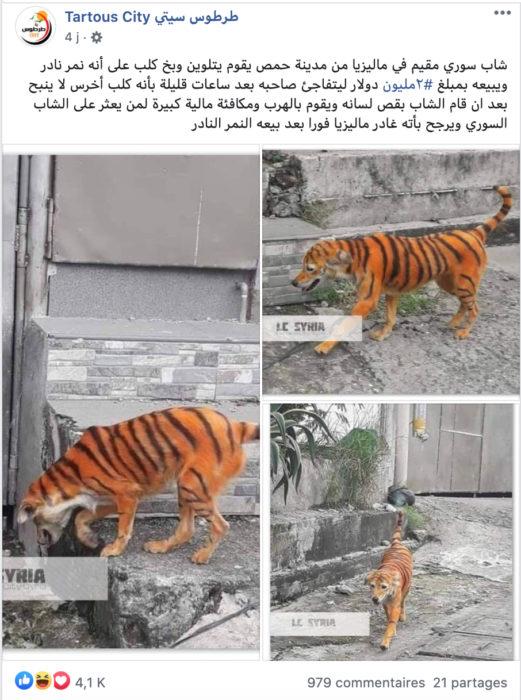 كلب بألوان نمر الفلبين وليس ماليزيا