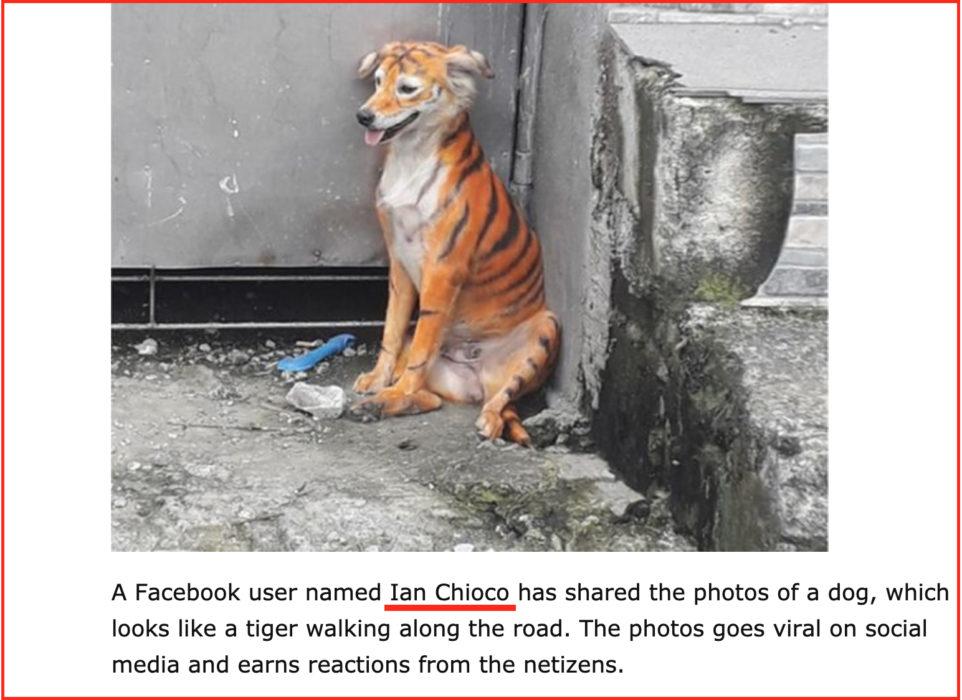 ناشر صور كلب بألوان نمر ian Chioco
