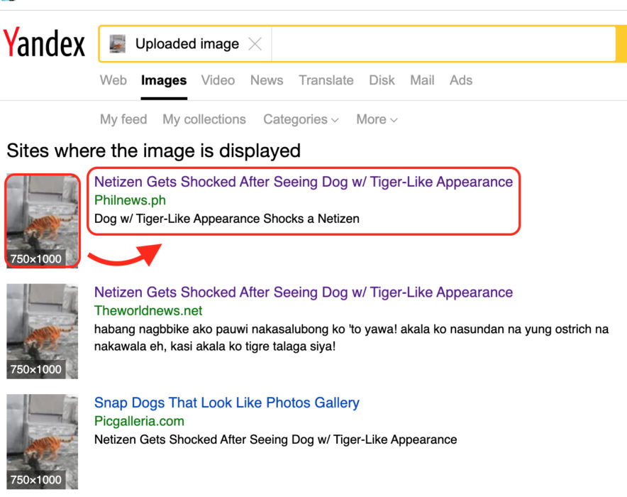 مقال ادعاء كلب بألوان نمر الفلبين وليس ماليزيا