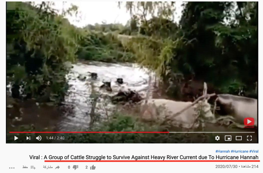 خروج قطيع ماشية سالما في المكسيك فيضان