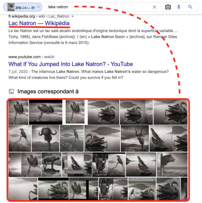 نتائج البحث في محرك جوجل