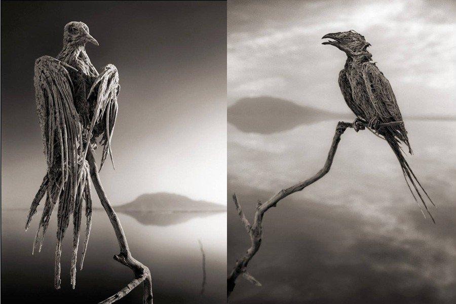صور طيور التقطها Brandt في بحيرة النطرون