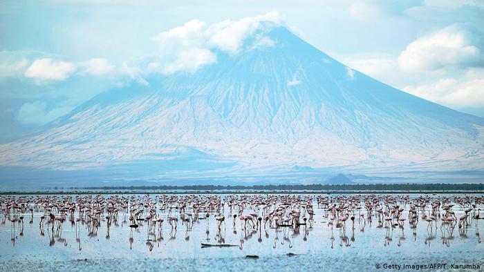 طيور النحام تعيش في بحيرة النطرون