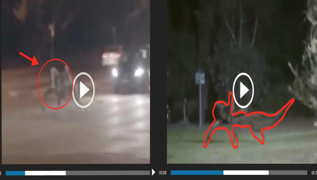 فيديو زائف مخلوق مرعب البرازيل