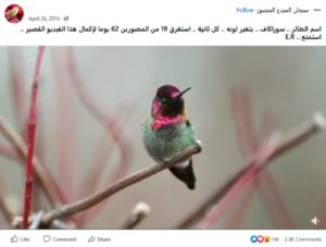 مصدر ادعاء طائر سوراكاف 2018 ادعاء مضلل فتبينوا