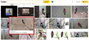 نتائج بحث فيديو طائر سوراكاف فتبينوا