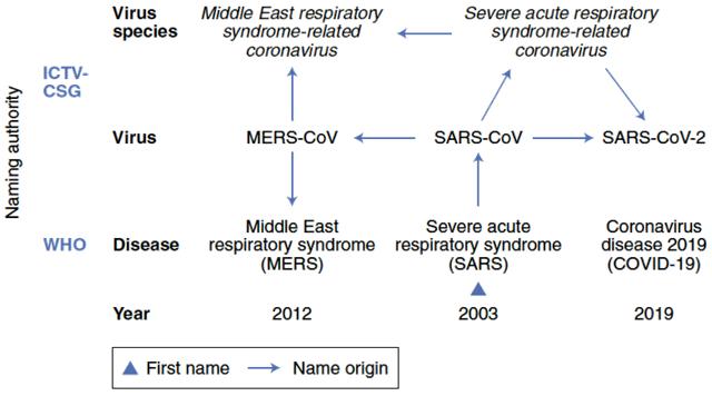 مراحل تسمية Covid19