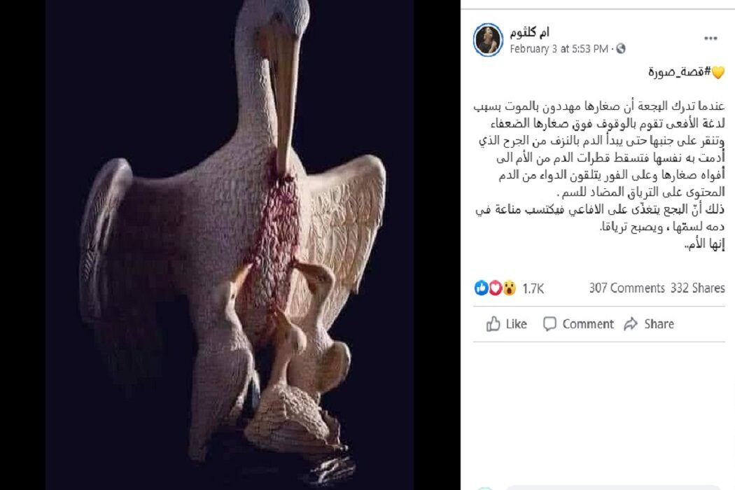 البجعة تجرح نفسها لتطعم صغارها ادعاء زائف فتبينوا