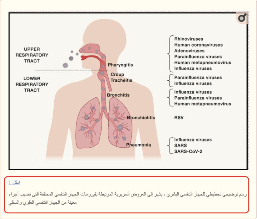 كوفيد-19 يصيب فعلا الجهاز التنفسي ويتسبب في تلفه