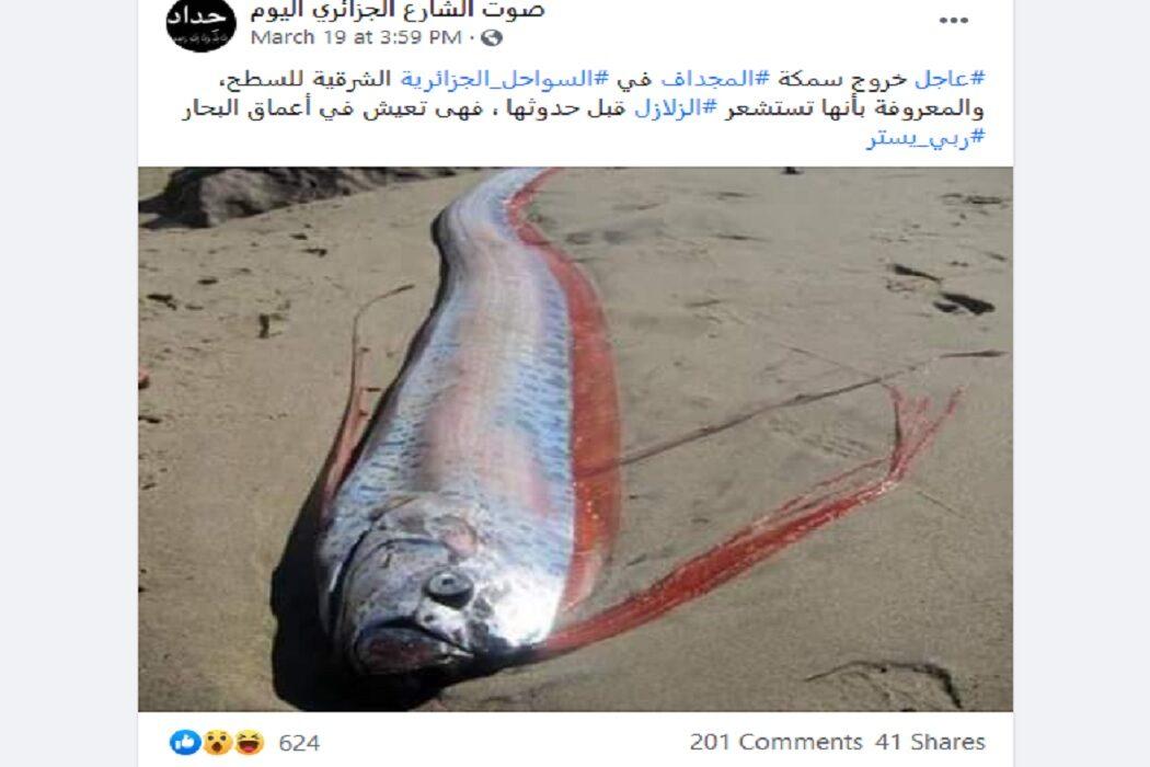 مصدر ادعاء صورة لسمكة المجداف على شاطئ الجزائر وعلاقتها بالكوارث فتبينوا