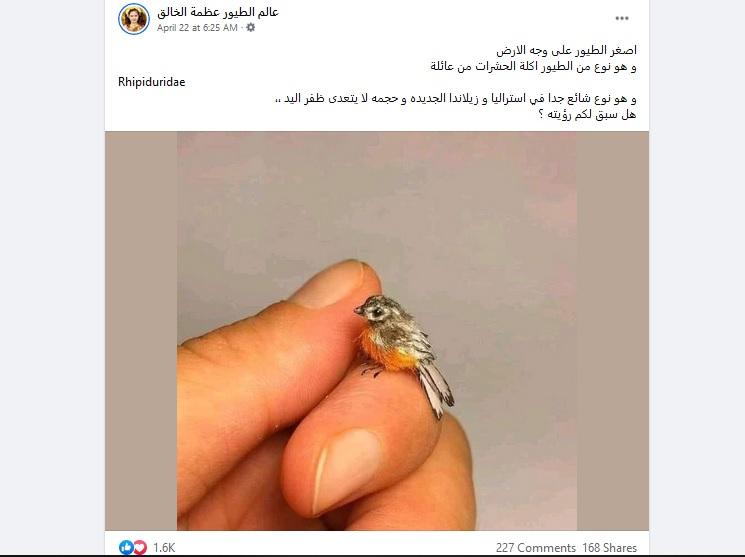 مصدر ادعاء أصغر طائر فتبينوا
