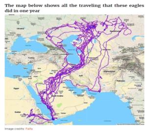 ادعاء خريطة تتبع نسر لمدة عشرين عام