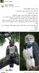 مصدر ادعاء أكبر طائر العقاب المخادع زائف جزئي فتبينوا