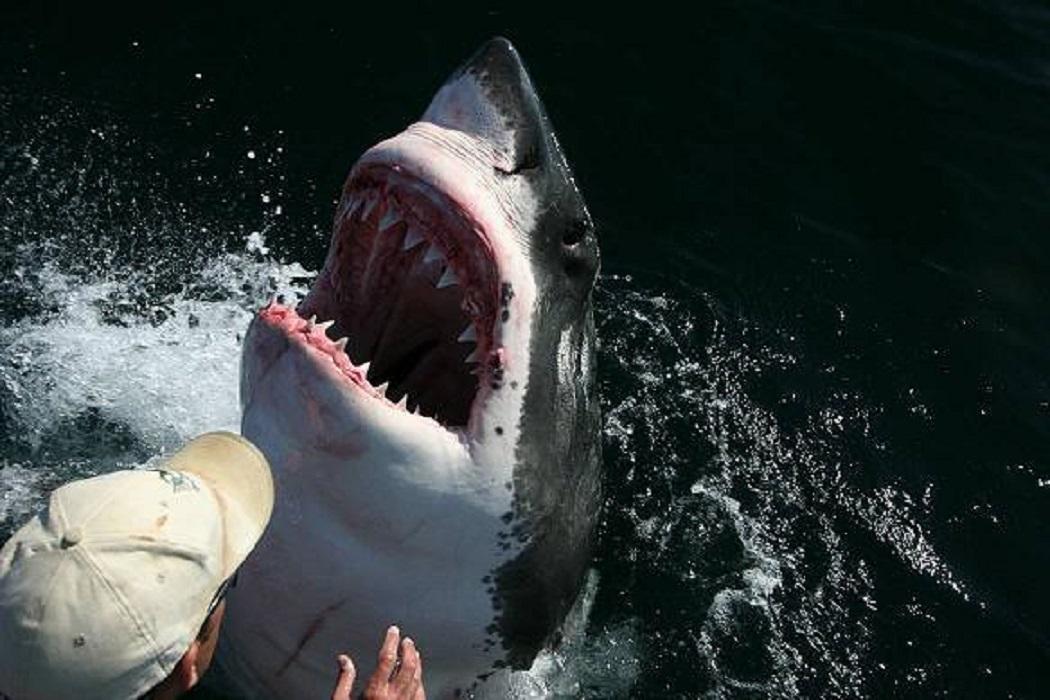 ادعاء سمكة القرش والصياد الاسترالي وصدقاتهما لا أساس له من الصحة