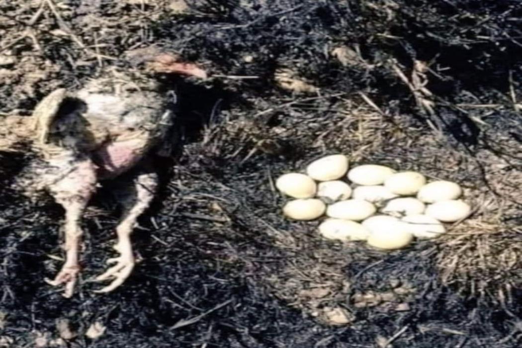 هذه الصورة المتداولة قديمة التقطت في إيران ولا علاقة لها بحرائق الغابات في تركيا