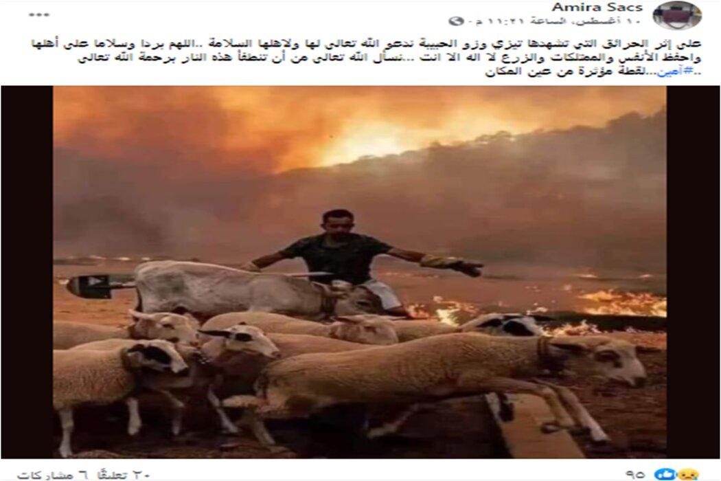 ادعاء صورة الاغنام من الجزائر