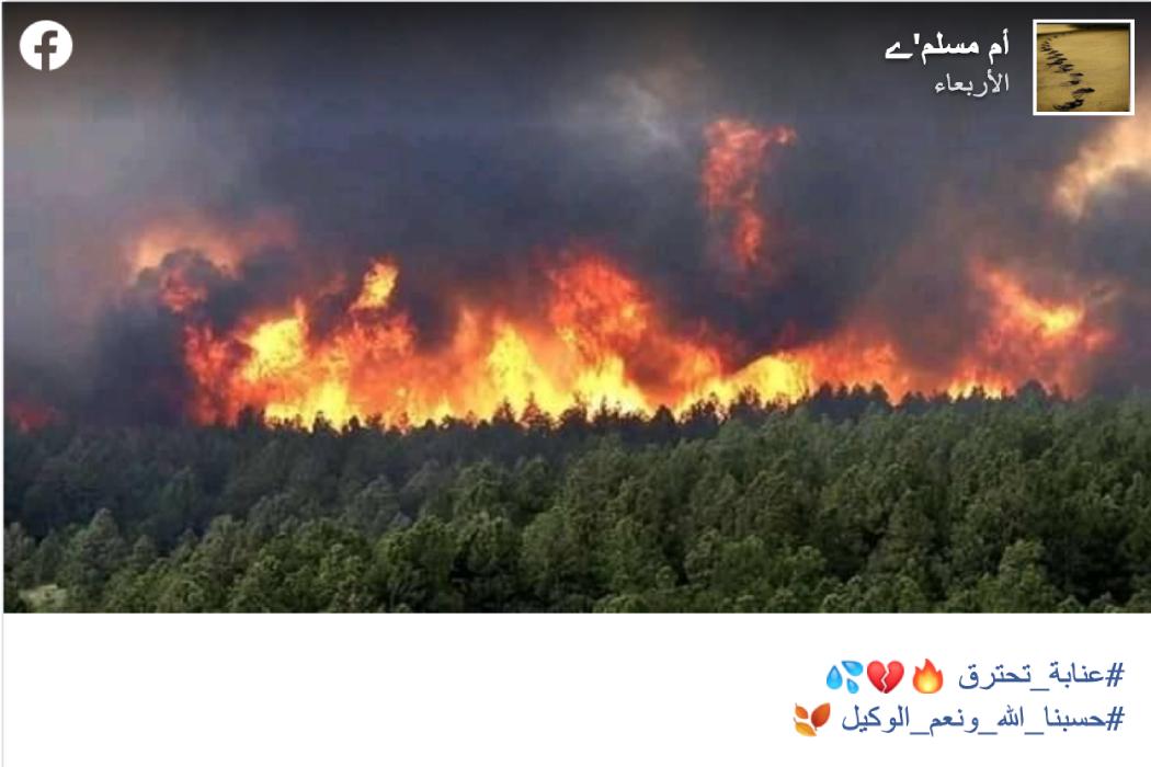 هذه الصورة التقطت في الولايات المتحدة الأمريكية وليس الجزائر