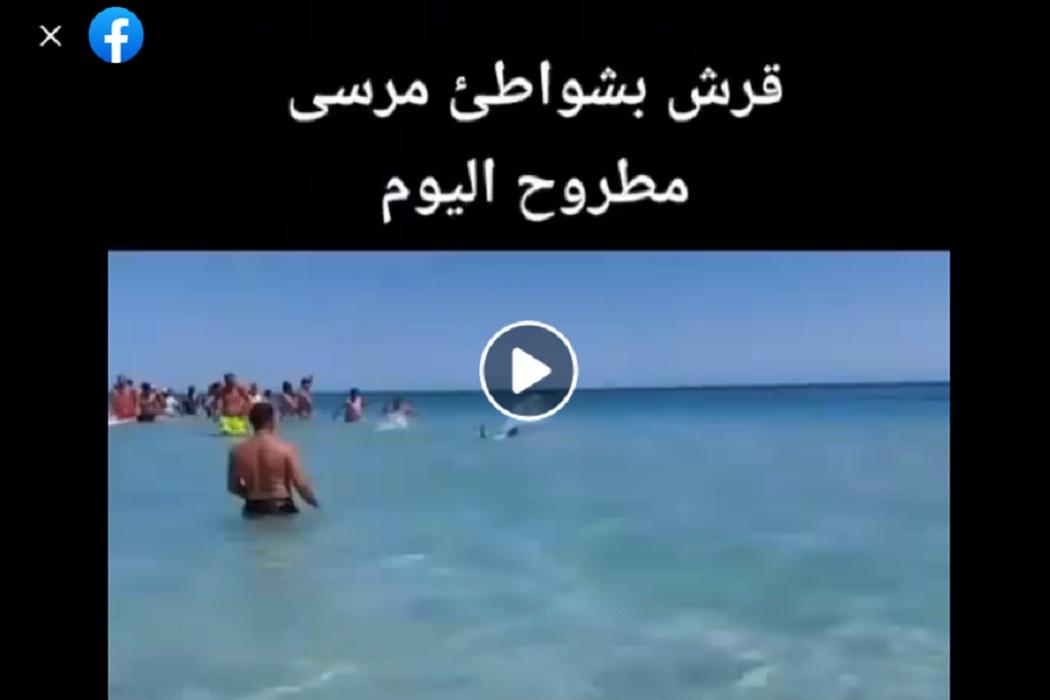 ادعاء سمكة قرش على شواطئ مرسى مطروح مضلل فتبينوا