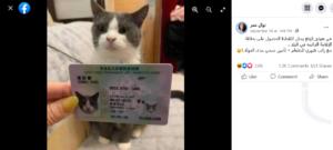 ادعاء صرف بطاقات الإقامة الدائمة للقطط في هونغ كونغ فتبينوا