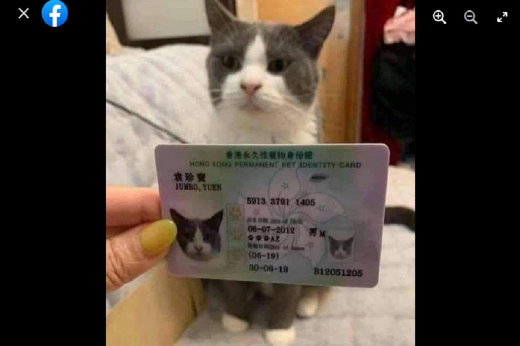 ادعاء مضلل صرف بطاقات الإقامة الدائمة للقطط في هونغ كونغ فتبينوا