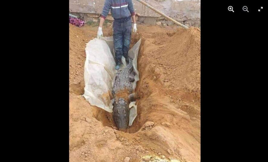 ادعاء موت التمساح في متنزه الزوراء في بغداد مضلل فتبينوا